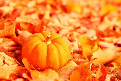 http://mes-recettes-toutes-vertes.cowblog.fr/images/pumpk.jpg